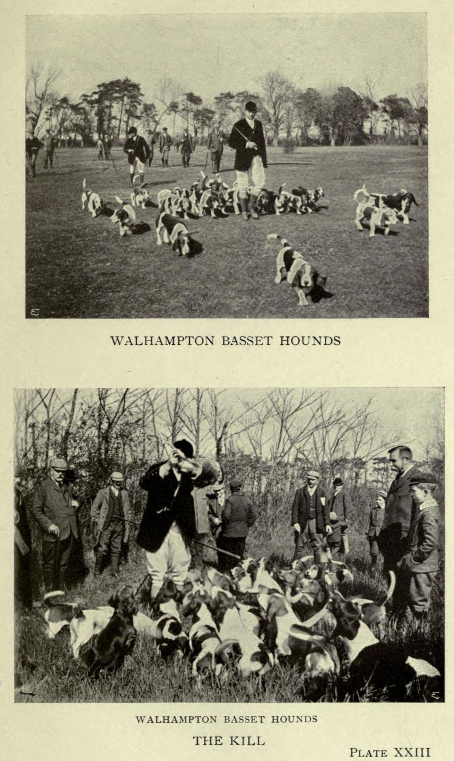 Hare Hunting and Harriers plate XXIII