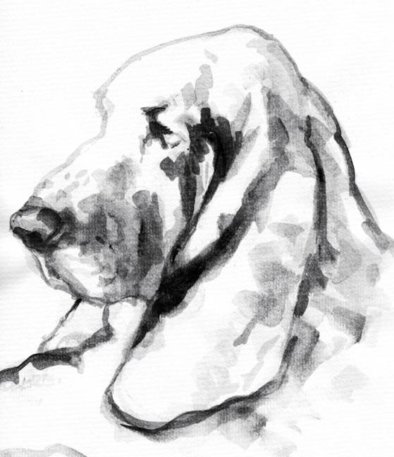 Drawing of a Basset Hound by Tony Roberts