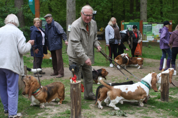 Basset Hounds at Friston Forest picnic