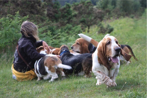 Sue Sampson and Basset Hounds